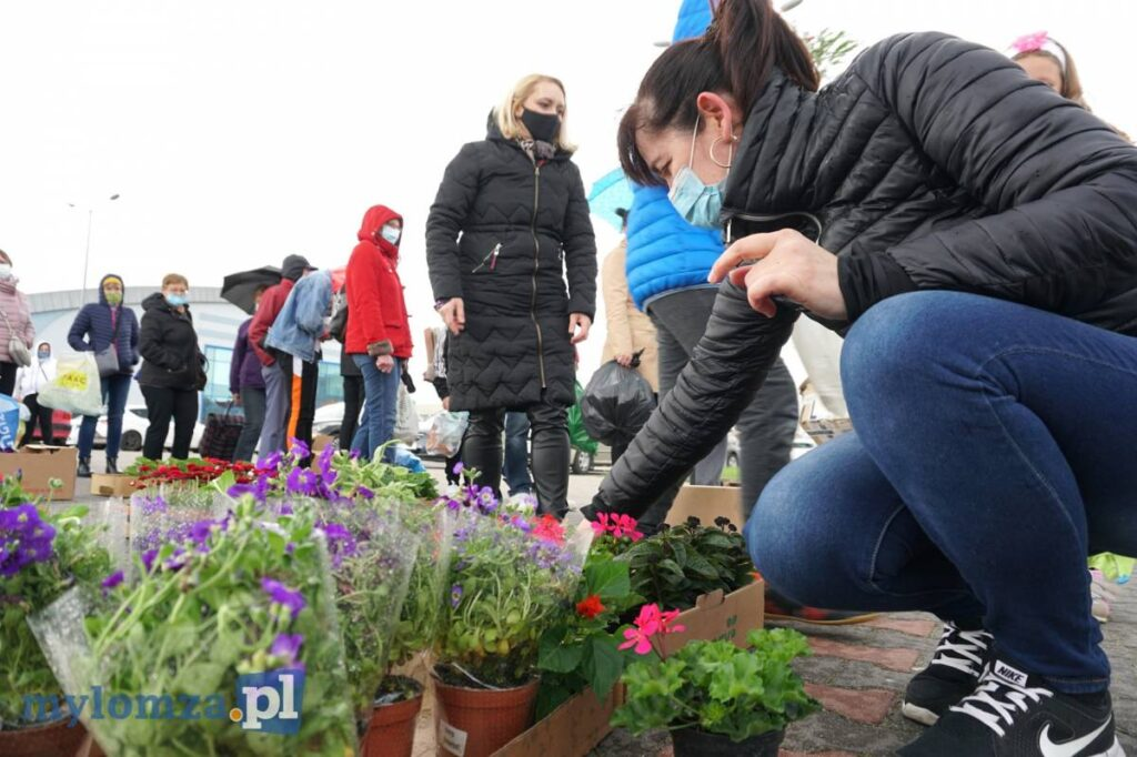Kobieta ogląda sadzonki kwiatów