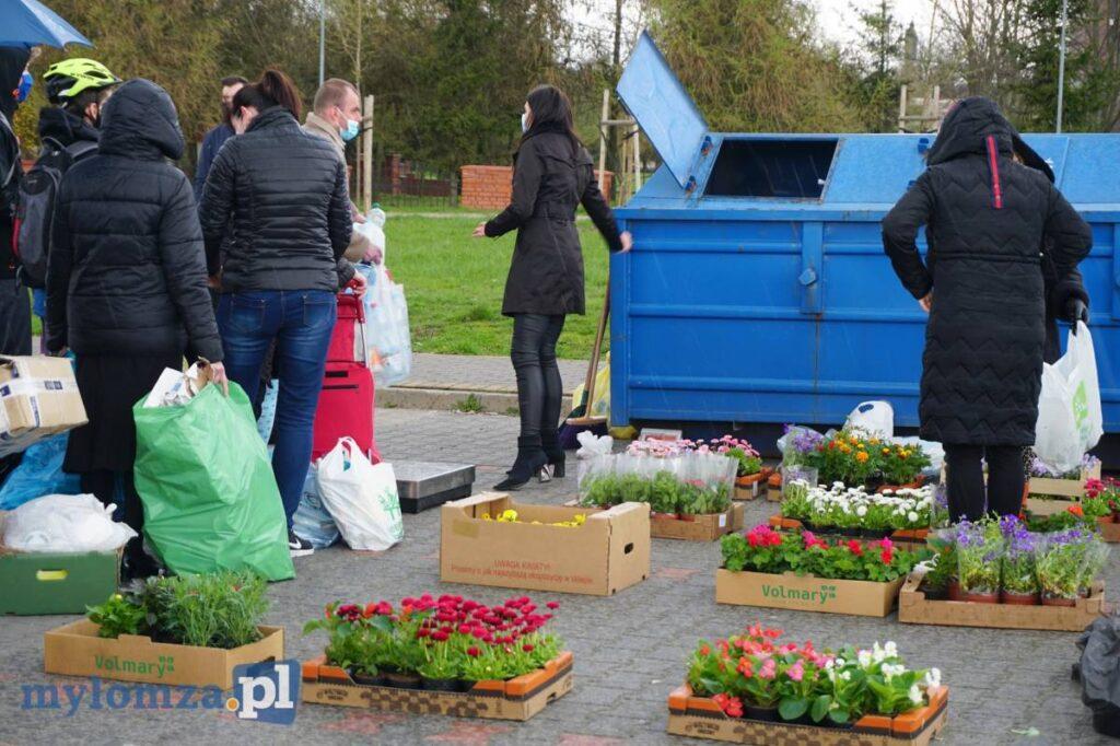Mieszkańcy Łomży oglądają sadzonki kwiatów
