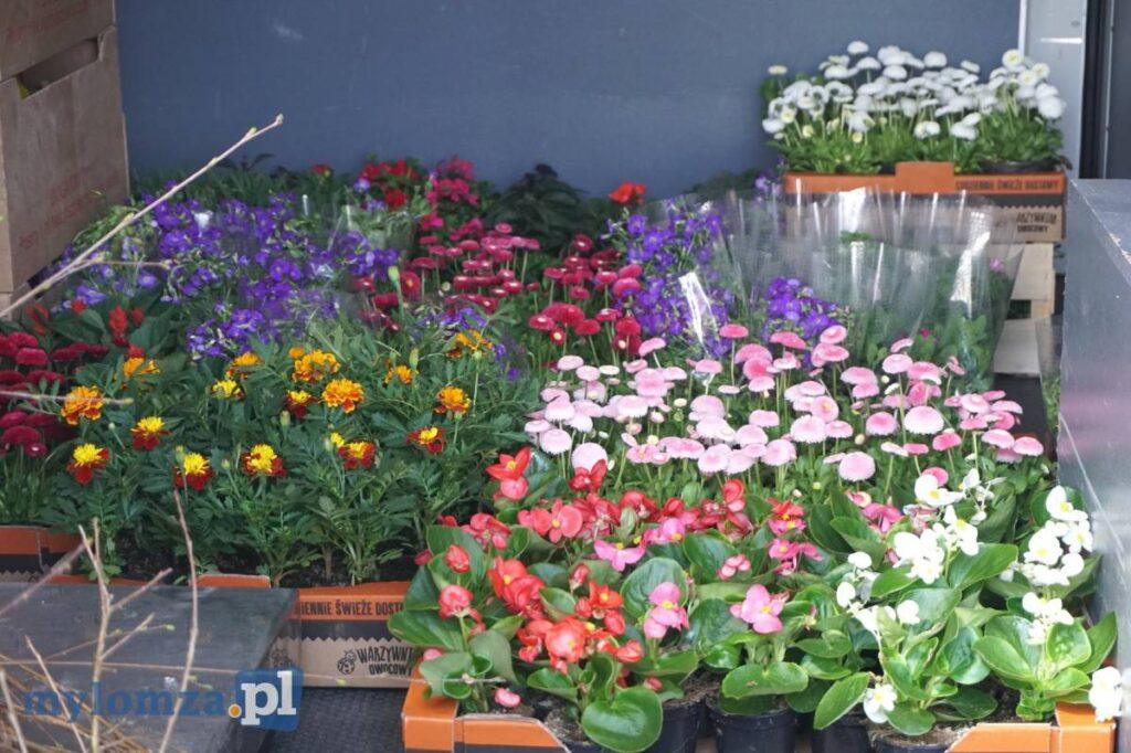 Na zdjęciu są widoczne kolorowe kwiatki