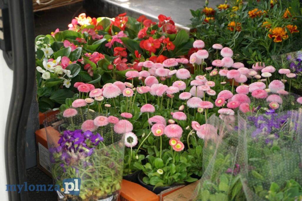 Sadzonki kolorowych kwiatków