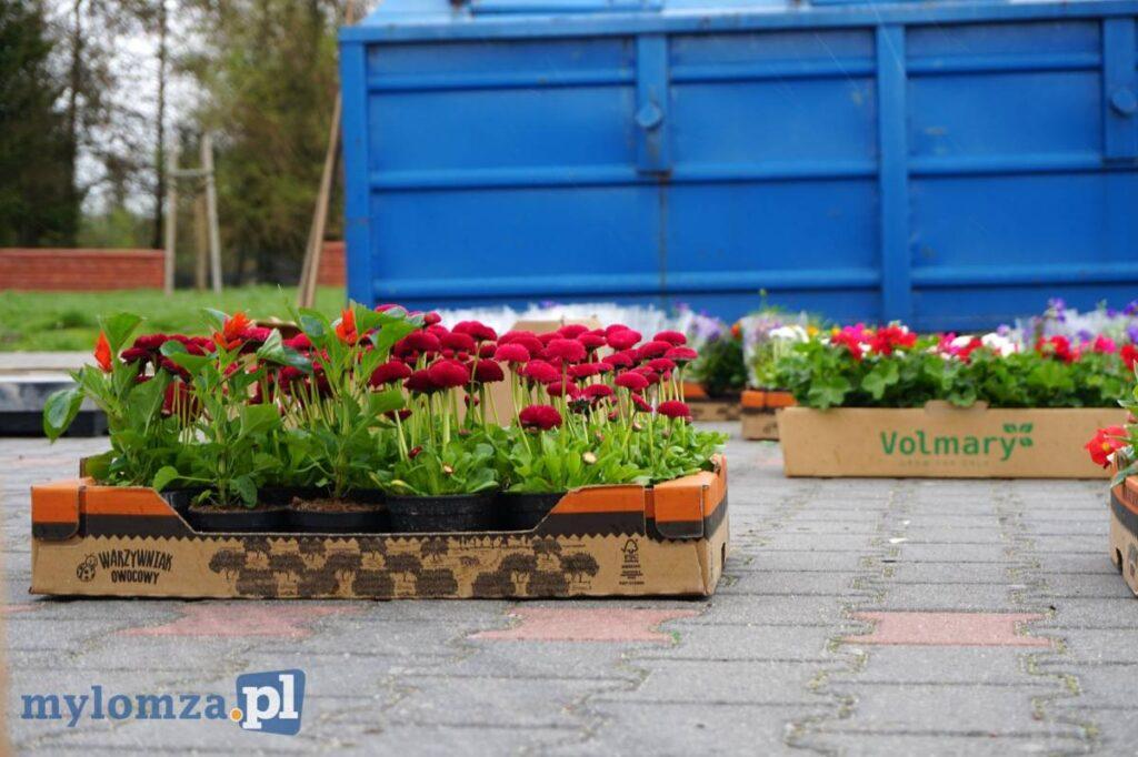 Sadzonki kwiatów, a w tle niebieski kontener